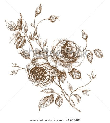 old styled vector rose trace of freehand drawing by devochka i zaicheg via