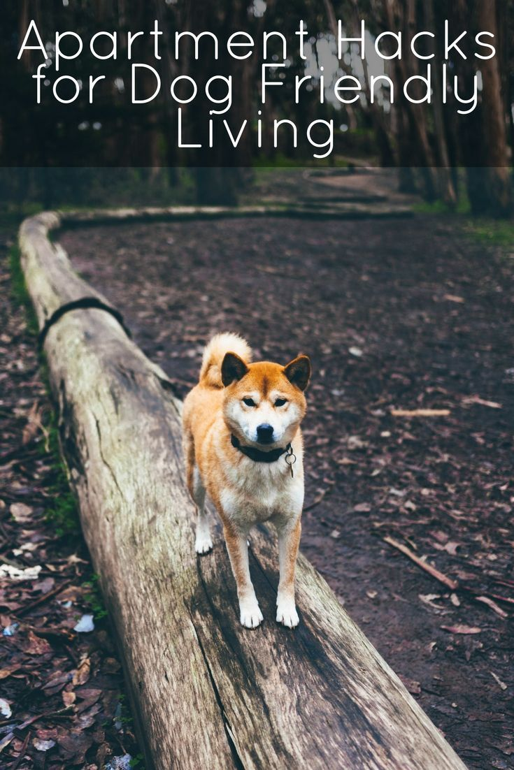 Living In An Apartment With Dogs Can Be A Challenge Our Apartments Are Dog Friendly But You Can Still Use Some Dog Friends Dog Training Dog Training Obedience