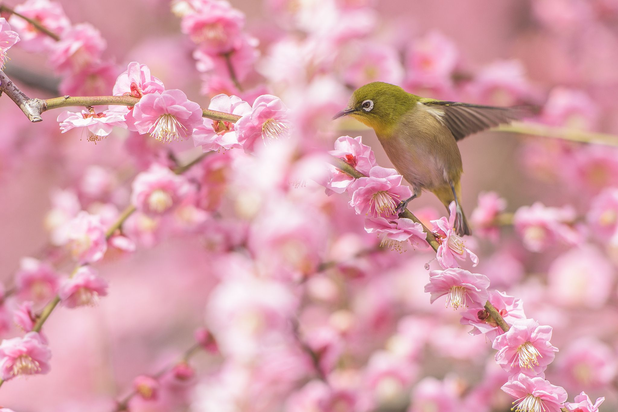 Spring in japan by nao on px beautiful places pinterest