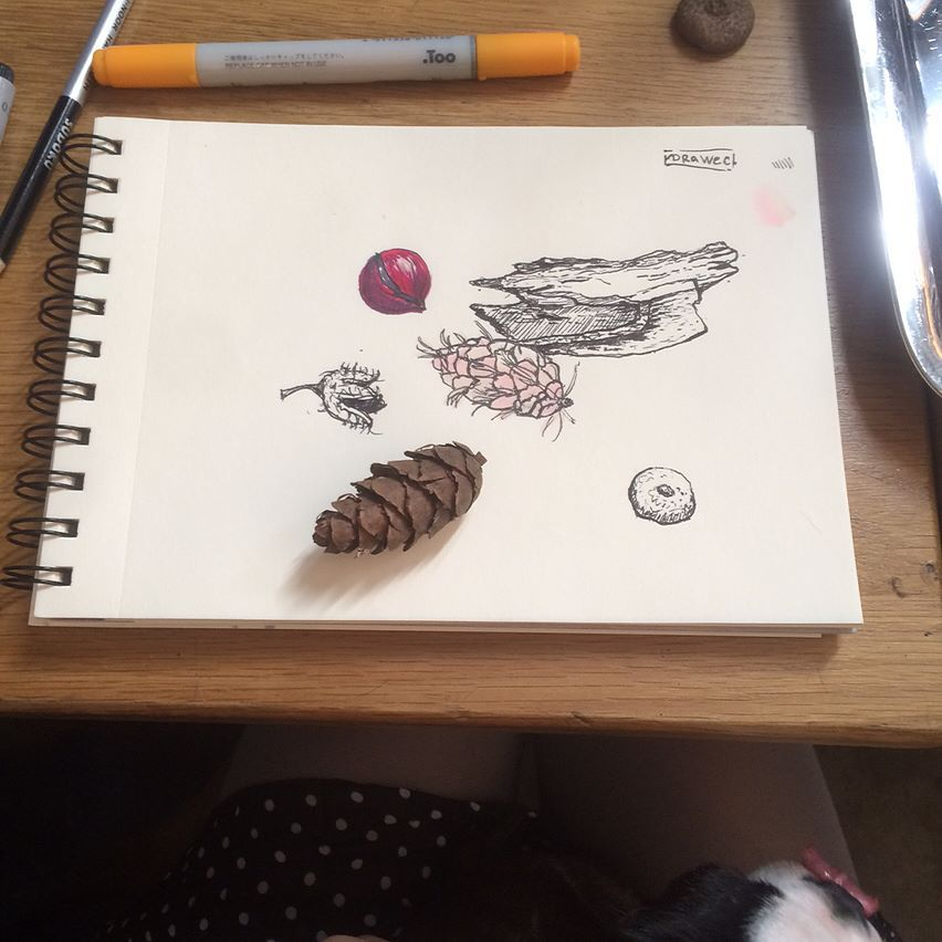 The pine cones task for #sketchflashmob2017 organized by @natalie_ratkovski was accidentaly the same week as our #creativebreakfast so I brought some cones and others scraps from park and was proudly drawing it in a café.