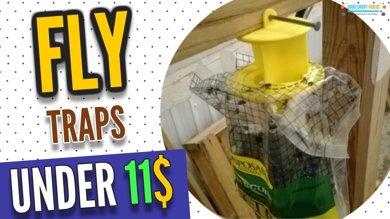 3 best fly trap under 11 get rid of flies today fly