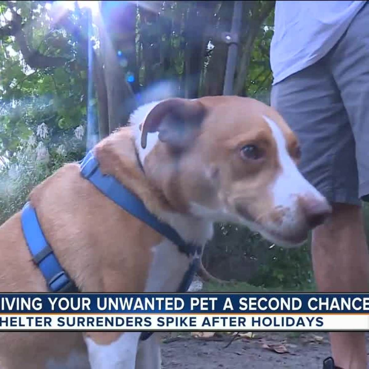 Prevent pet surrenders after the holidays Give new pets