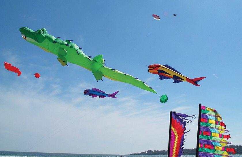 25 Ft Alligator Kite Line Laundry Designed By Bernhard Dingwert