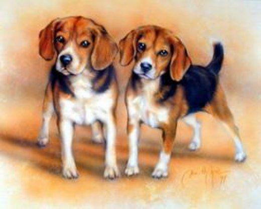 Beautiful Two Beagle Adorable Dog - 9d7a0052a31ba2671bebc7f6d4b6f43e  Snapshot_16519  .jpg