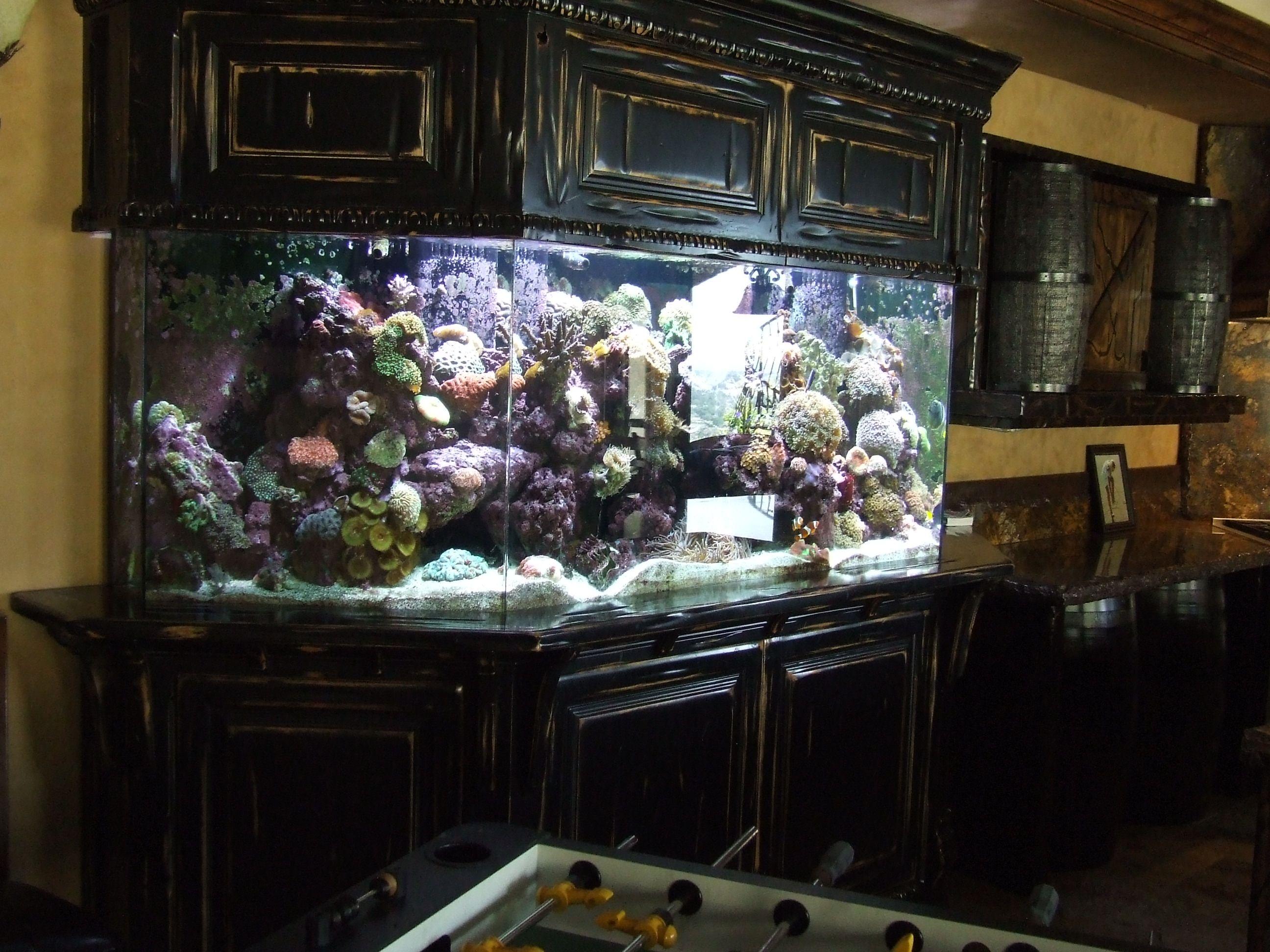 26 Unique Aquarium Furniture Ideas Innovative and Reliable
