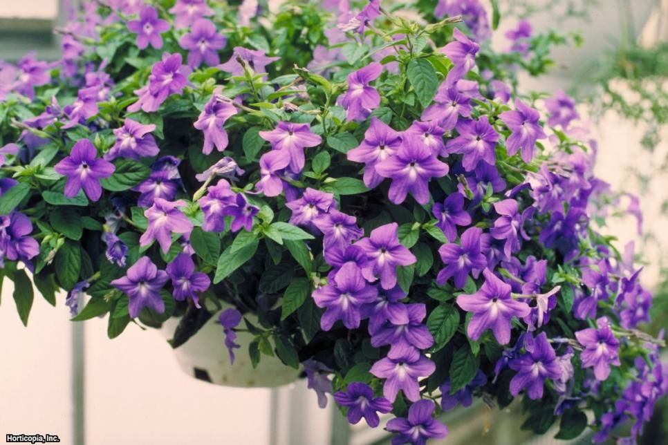 From begonias to impatiens, see which annual flowers thrive in shady spots, plus get planting and growing information from the experts at HGTV Gardens.