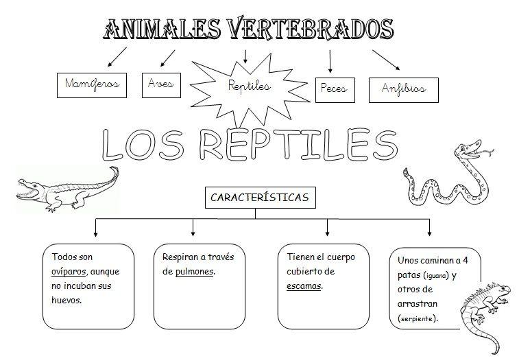MIS COSAS DE MAESTRA*: Animales Vertebrados: Esquemas   C.Naturales ...