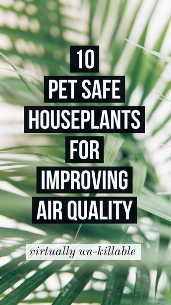 10 Pet Safe Houseplants for Improving Air Quality #easyhouseplants