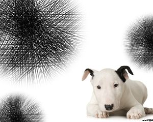 Terrier powerpoint template this little bull terrier will help little bull terrier background for powerpoint terrier powerpoint template is a free template with a terrier dog background image that you can use for toneelgroepblik Images