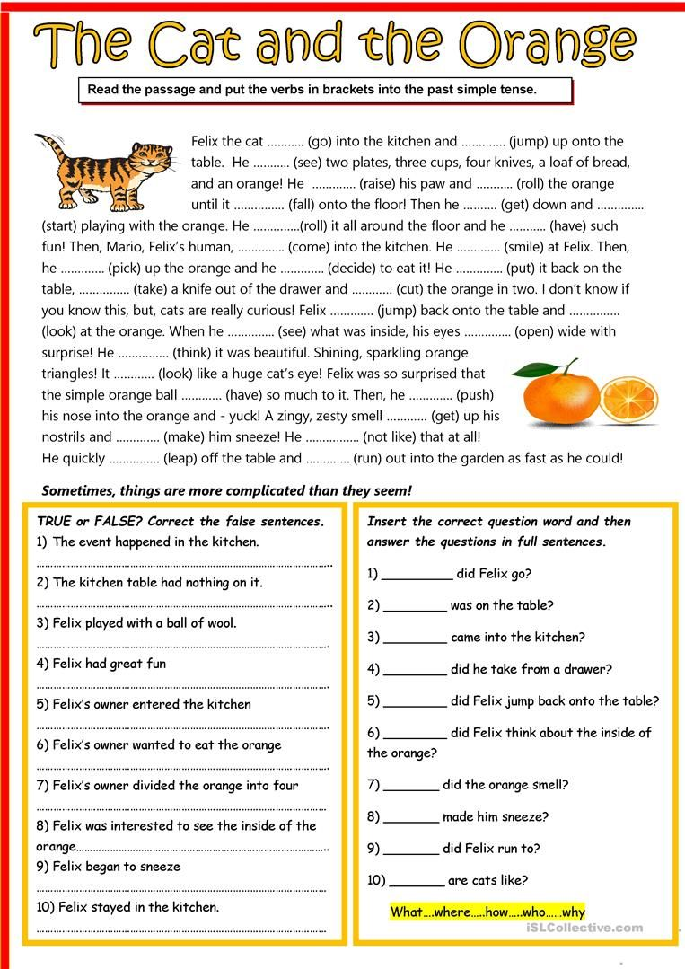 The cat and the orange in 2020 English reading, English
