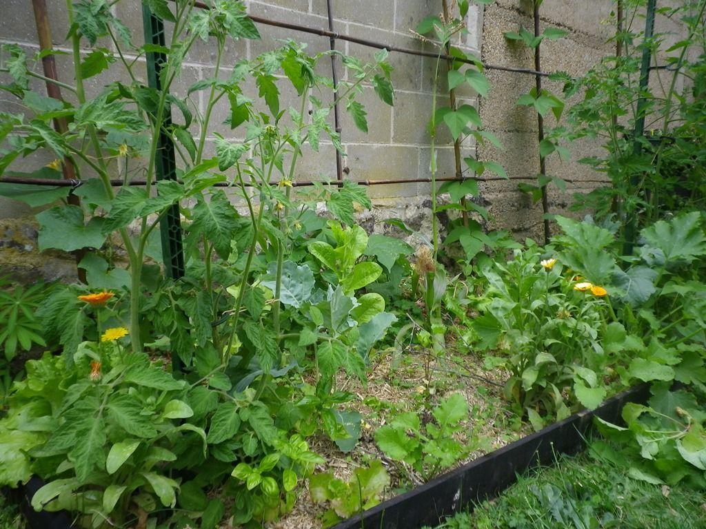 Comment s en sortir avec un petit potager optimiser l occupation de l espace 1 3 potager - Jardin petit espace ...