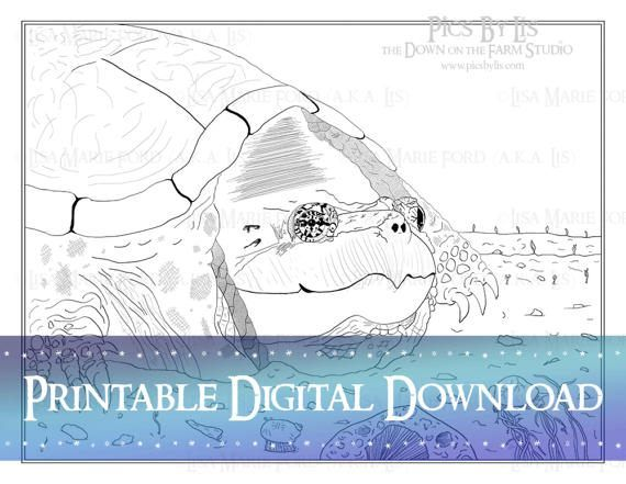 "Grandmother Turtle with snails, fossils, and seedlings Printable Coloring Page from the book ""Many Meetings: A Nature's Curiosities Coloring Collection"" by Lisa Marie Ford via Digital Download available via the DownontheFarmStudio Shop."