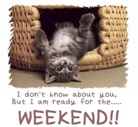 Have a Nice Weekend Quotes | HAVE A GOOD WEEKEND | Cute Cats