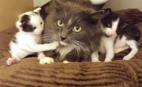 Covered with Kittens. Mia's Story. Mama cat, Kittens