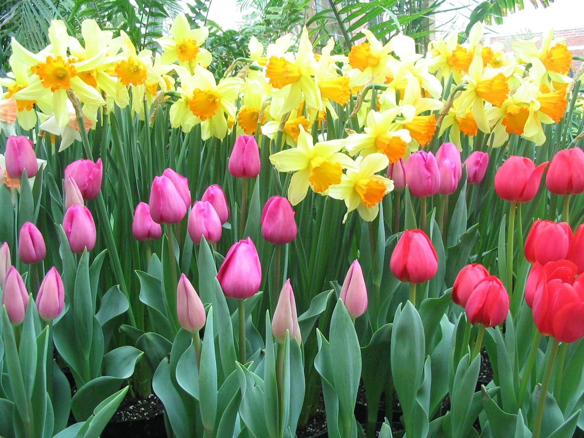 17 Best images about Spring Bulb Gardens on Pinterest Gardens