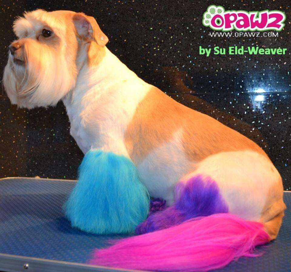 Repinned- Pet hair color grooming.by Su Eld-Weaver and Deborah ...
