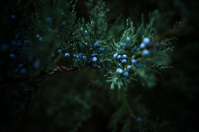 #winter #berries
