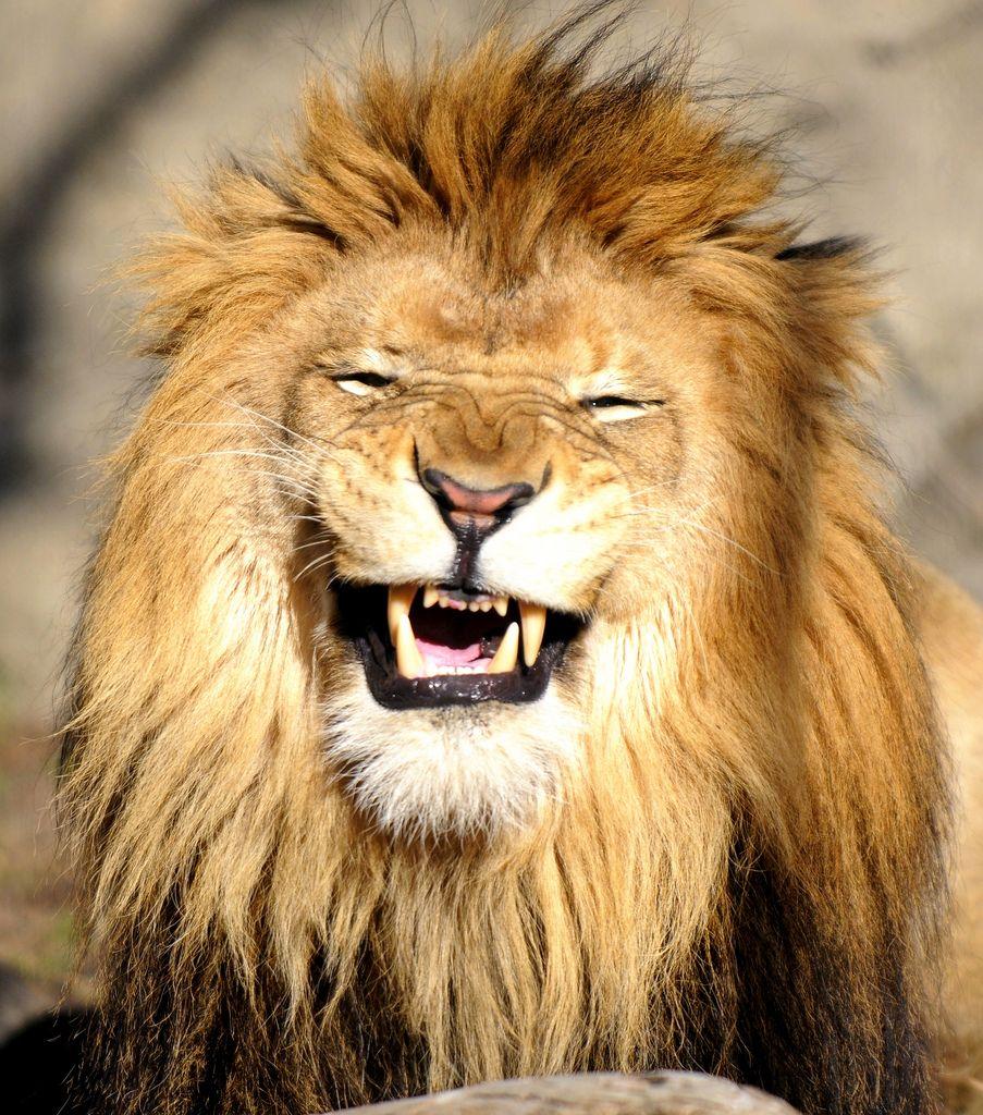 animal laughing - Buscar con Google | Animals laughing ...