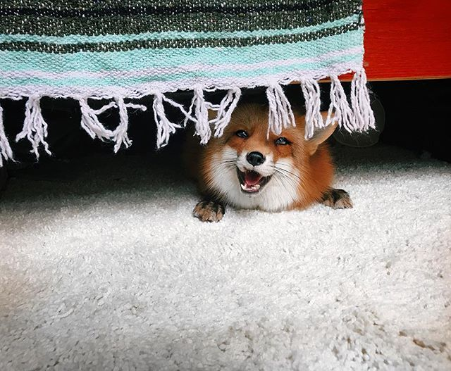 The monster that lives under the bed.