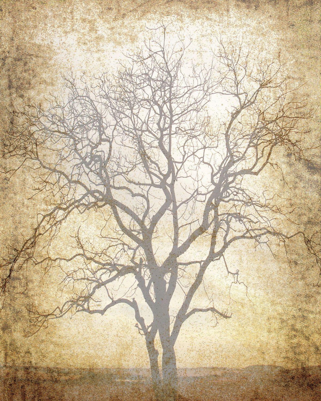 Scrapbook paper download - Printable Scrapbook Page 8 X 10 Jpg Download Tree Print Sepia Brown Insert Paper Digital Art