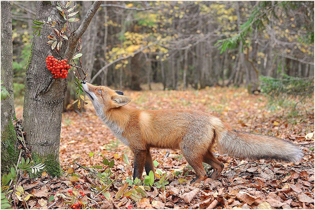 также животные смоленской области картинки листьев