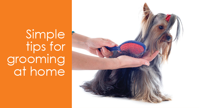 Dog Training And Behavior Tips For Dog Grooming Dogcaresupplies Dog Dogs Pet Pets Grooming Doggrooming Doggroo Dog Grooming Tips Grooming Dog Grooming