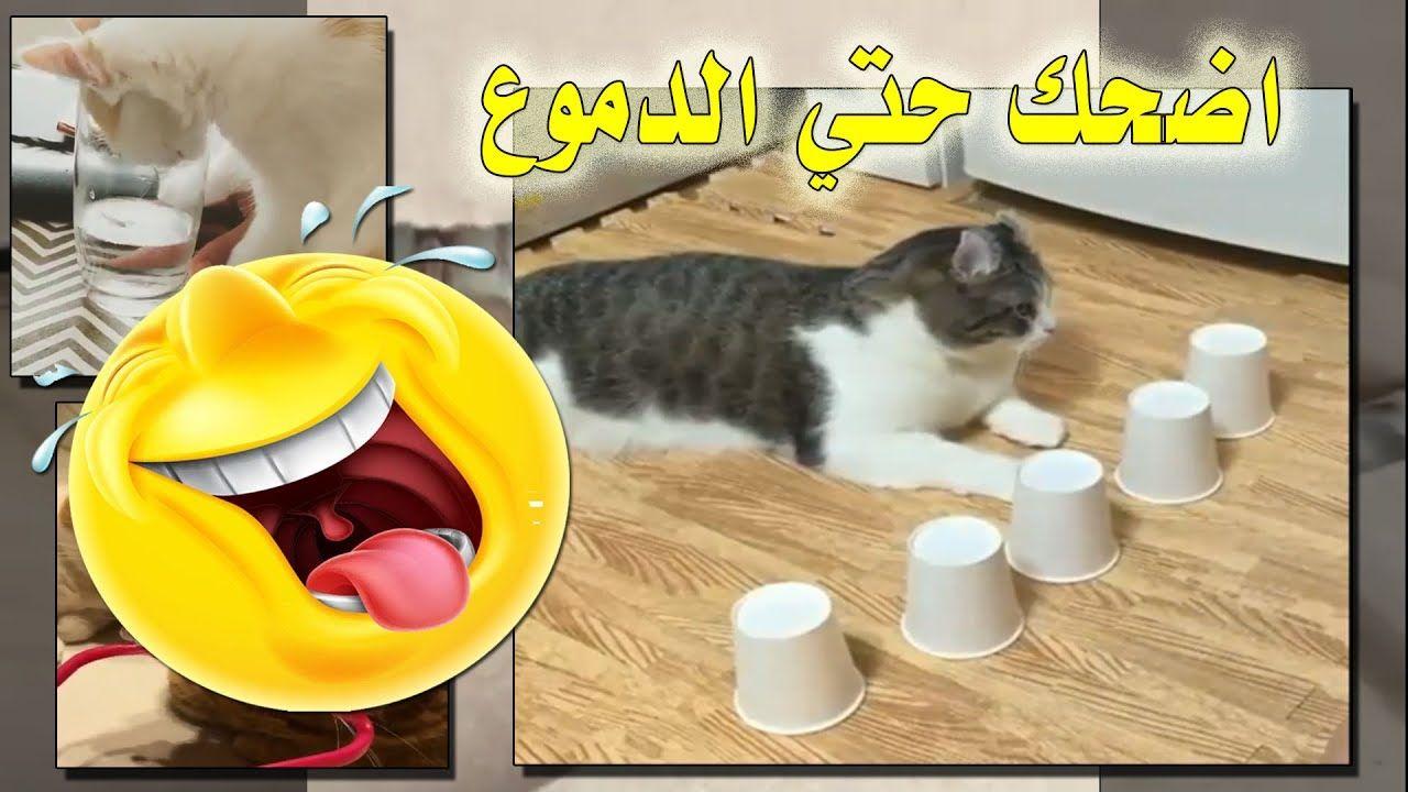 قطط مضحكة جدا قطط مضحكة حتى البكاء Places To Visit