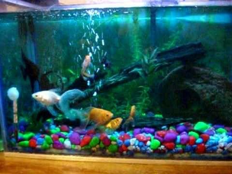 Peceras decoradas con corazones peces buscar con google for Peces para pecera