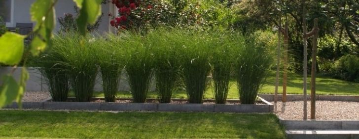 moderne gartengestaltung mit gräsern - wapdesire - wapdesire, best,