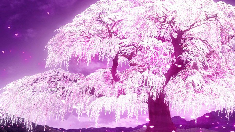 Cherry Blossom Tree Anime Cherry Blossom Wallpaper