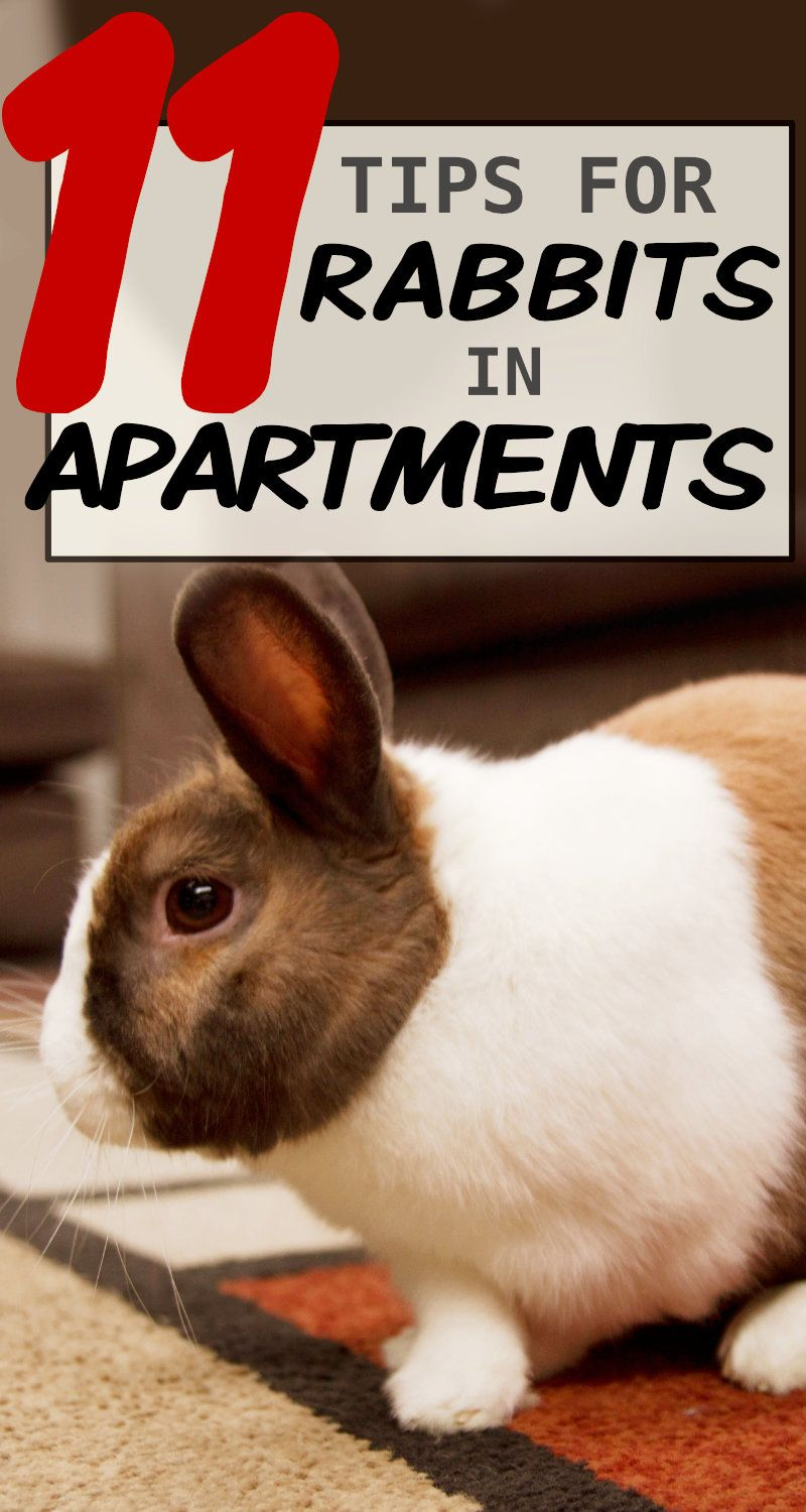 11 Tips To Keep Rabbits In A Small Apartment In 2020 Silver Fox Rabbit Rabbit Pet Bunny