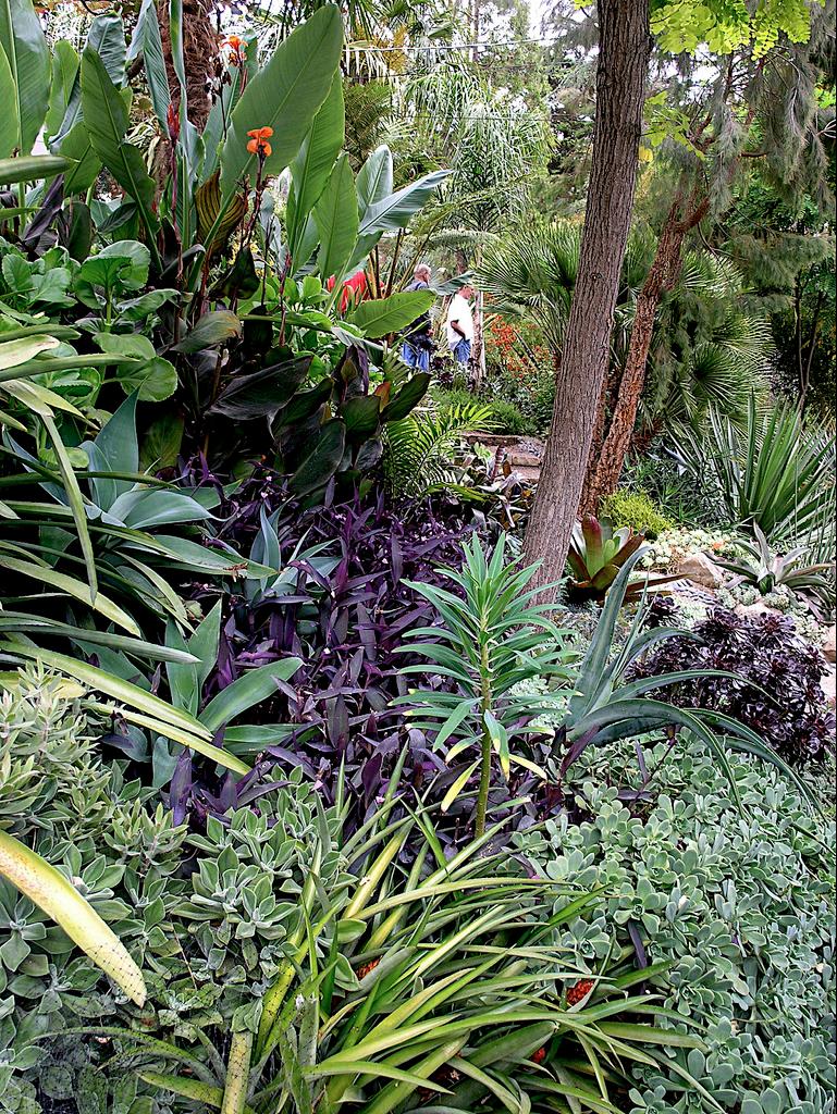 Pin by Ali K on Dream Tropical Garden | Pinterest | Tropical garden ...