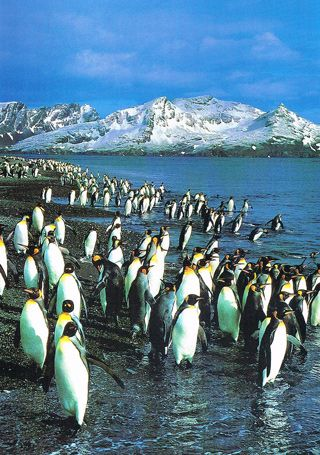 Patagonia (Chile / Argentina) to see penguins and whales - and not quite on the Antarctica yet!