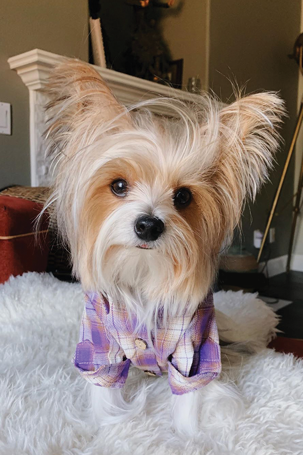 Top 15 Cutest Yorkshire Terriers Make You Go Mad After Seeing Them Yorkshire Terrier Cutest Small Dog Breeds Cute Small Dogs