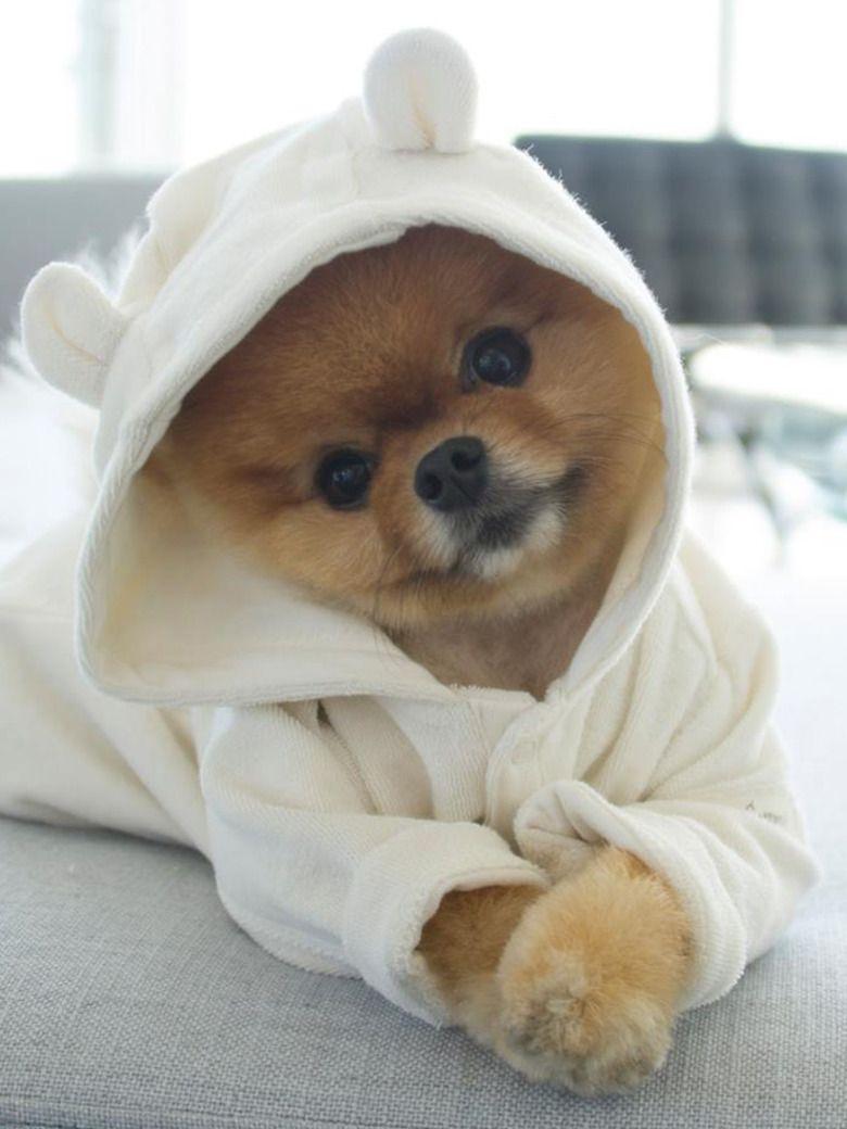 Les 10 chiens qui prennent la pose sur instagram mode de for Hotels qui acceptent les chiens