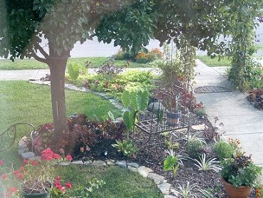 beauteous trees to plant near house. Stone Border around House  Landscaping Around Trees Ideas for the Pinterest