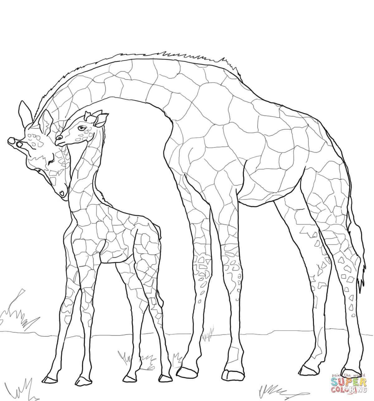 baby giraffe and mother coloring page supercoloring com | pictures ...