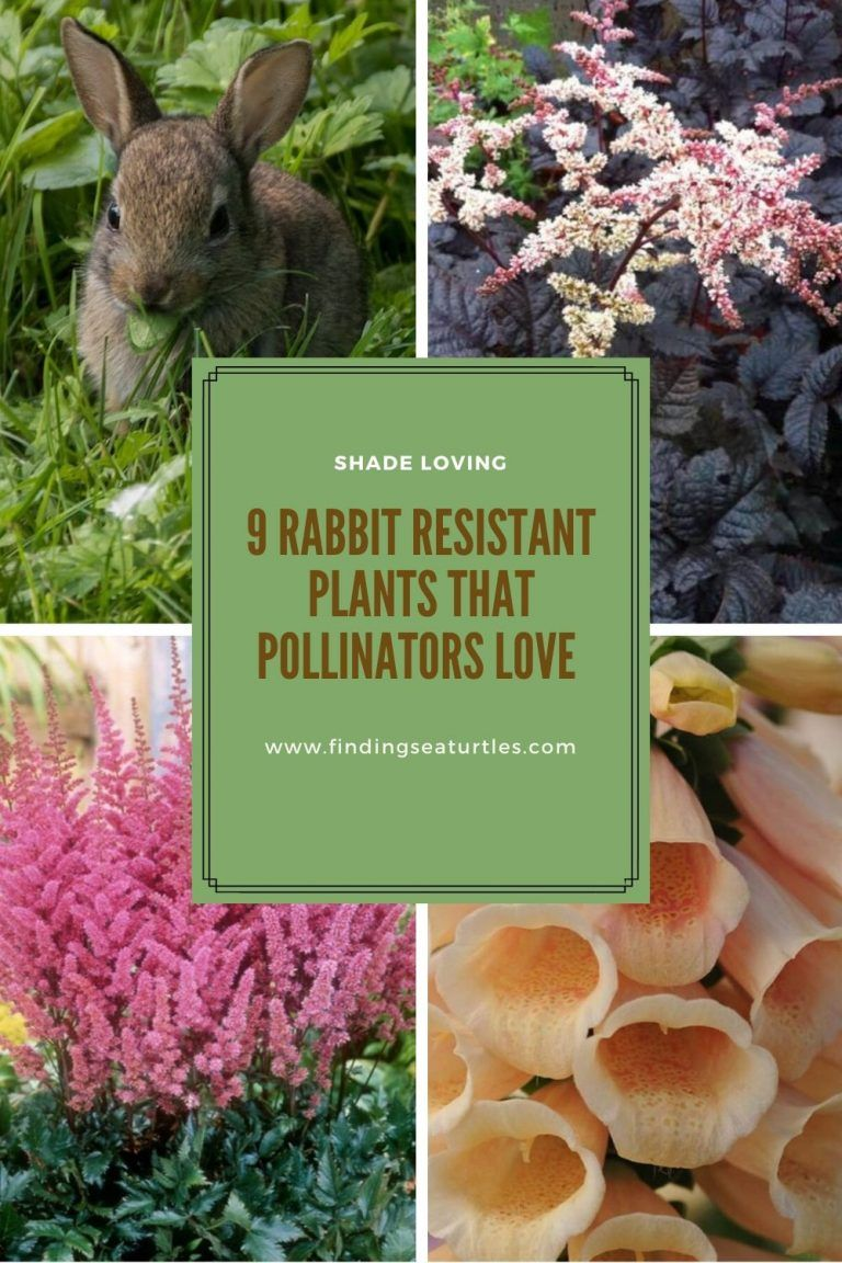 Pollinator Plants that are Rabbit Resistant - Finding Sea Turtles