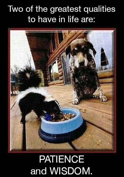 Smart pup!