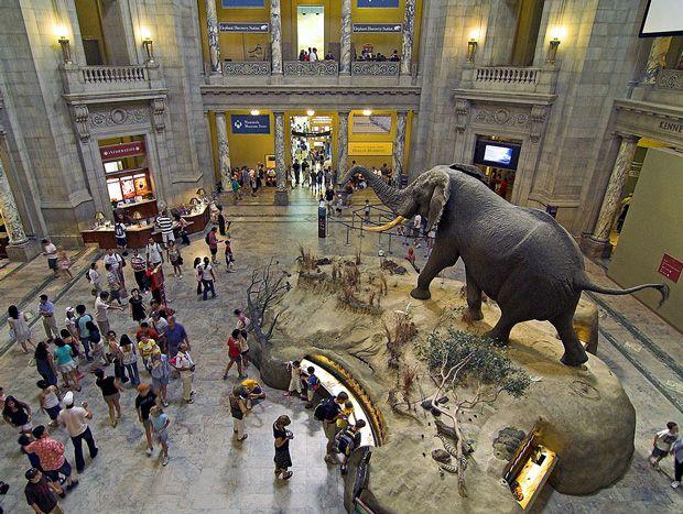 9d85bfb3f74ecde635d10f50d1c7dcee - How Do I Get To The Museum Of Natural History