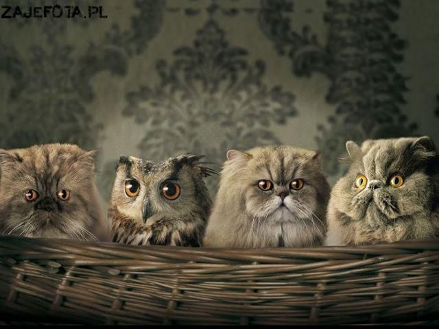 Oops...whooo is out of place here??