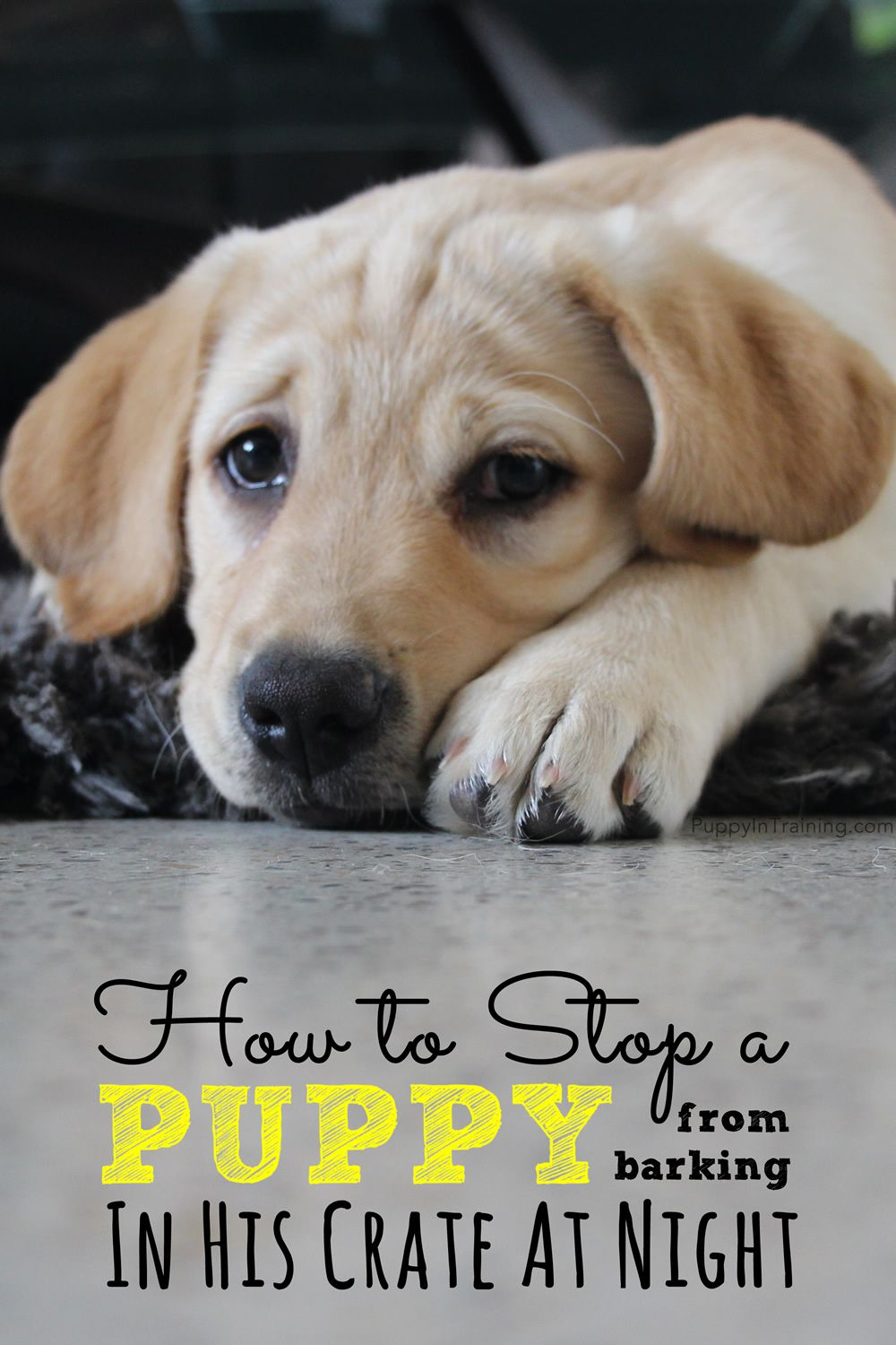 How To Stop A Puppy From Barking In His Crate At Night Puppy