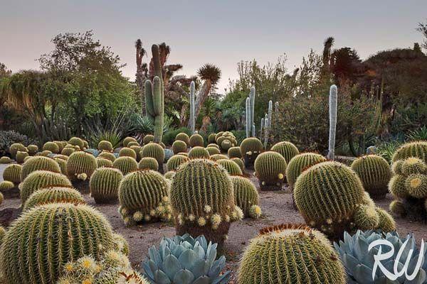 Desert Garden Sunset At The Huntington Botanical Gardens San