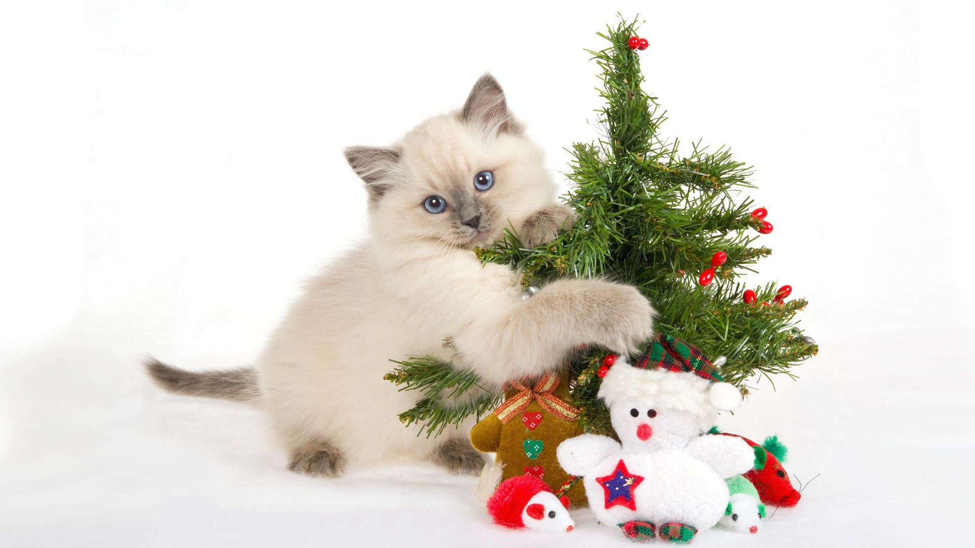 Funny Christmas Cat ~ Protecting The Catnip Tree