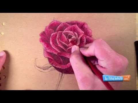 How To Draw A Rose With Colored Pencils Youtube Watercolor