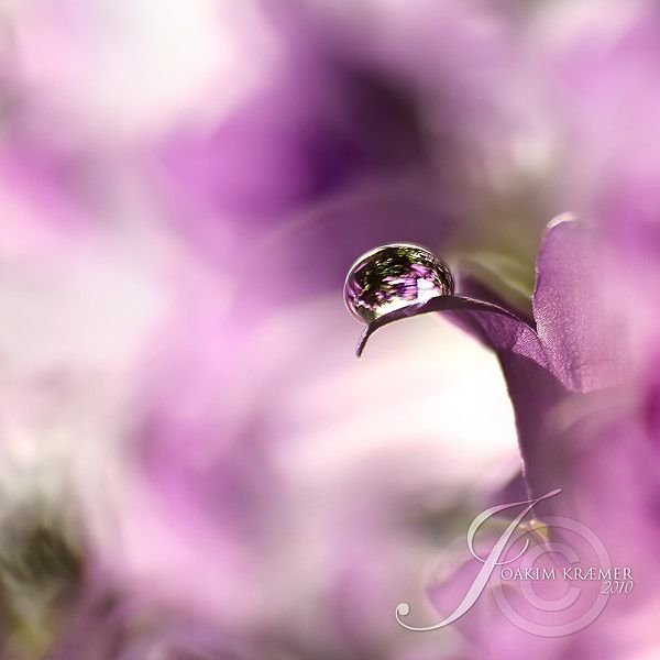 Ближе к природе с фотографом Joakim Kraemer