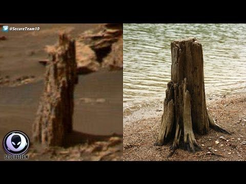 ANCIENT Tree Stump Found On Mars? 4/22/17 - YouTube