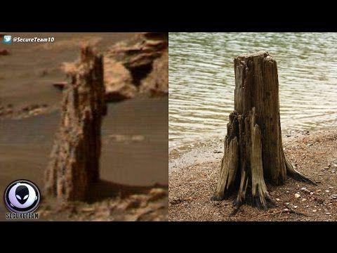 ANCIENT Tree Stump Found On Mars? 4/22/17 - YouTube