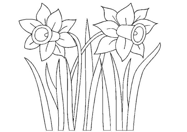 Coloriage jonquilles coloriage colorful pictures daffodils et coloring pages - Dessin jonquille ...