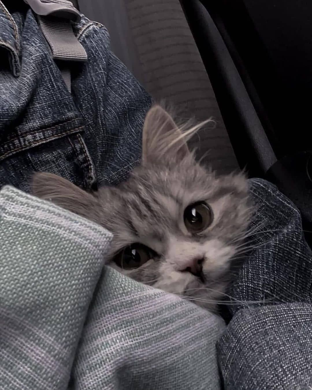 Cat Refuses To Eat After Human Dad Surrendered Him To The Shelter For A New Couch Sevimli Hayvan Yavrulari Komik Hayvan Komik Kedi Resimleri
